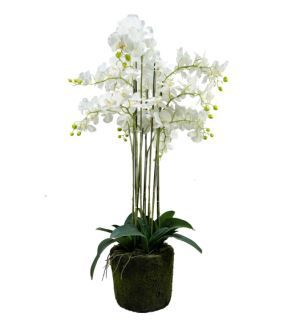 Artificial Fabric Phalaenopsis Flower Bonsai